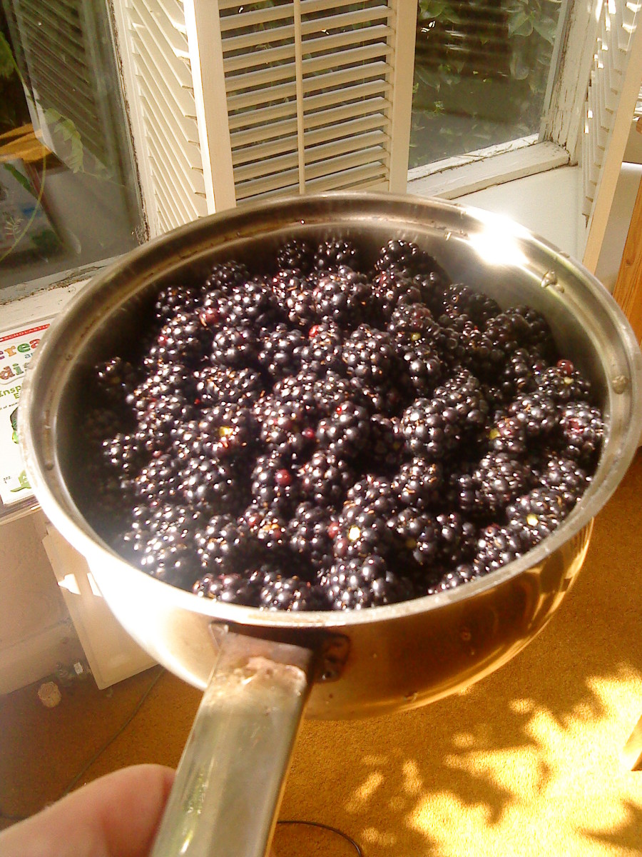 Freshly picked and washed blackberries