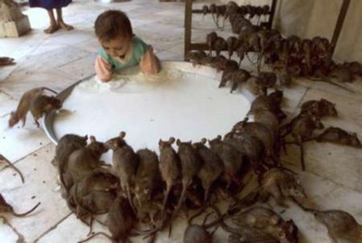 rats surrounding a child