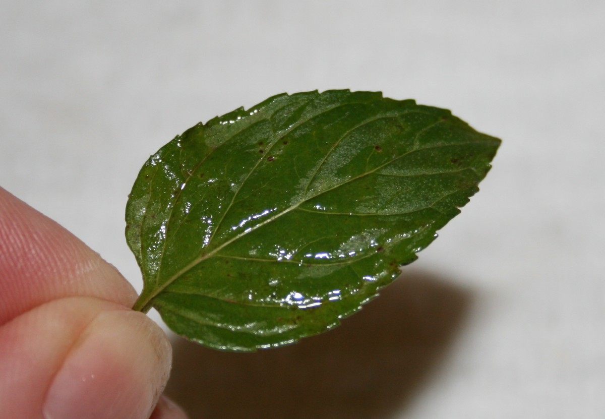Lightly brush dry leaves with egg white or dip them in flavored water.