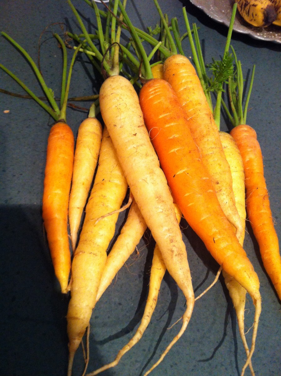Fresh carrots from the local farmer's market.