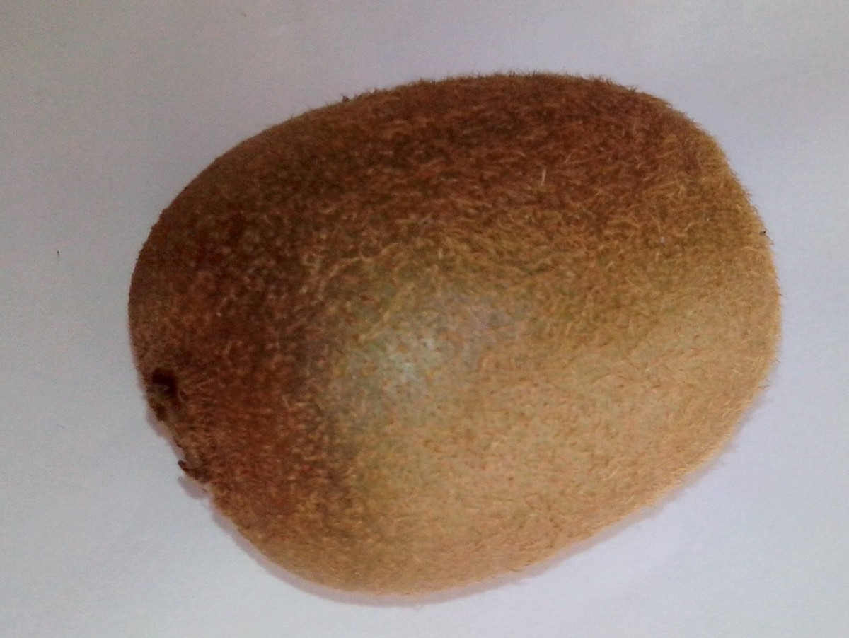 The kiwi fruit