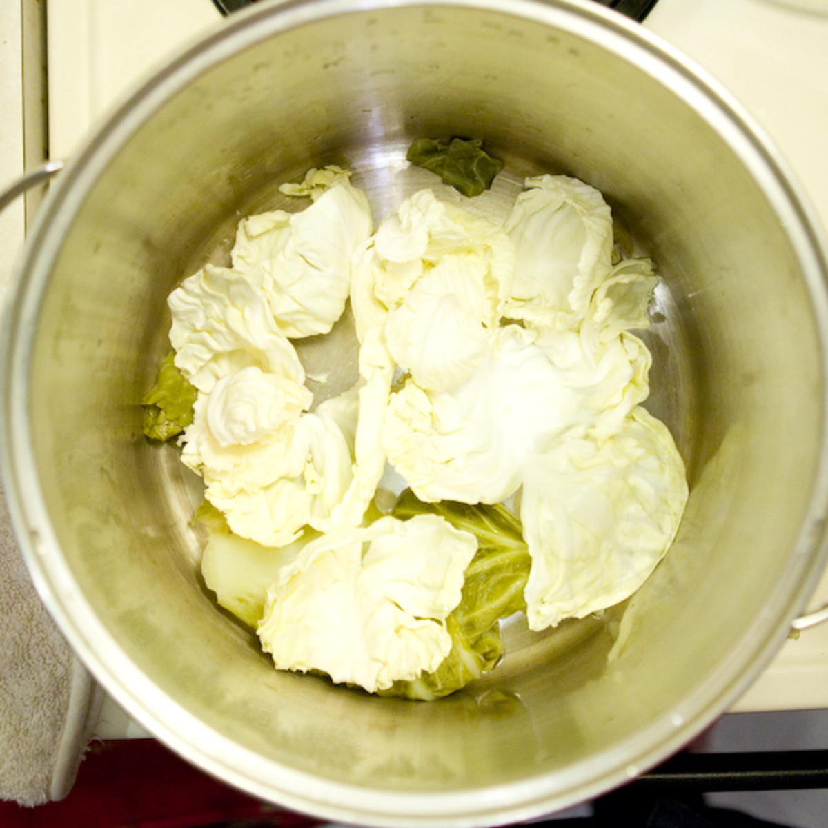 Place any broken cabbage leaves in the bottom of the pot