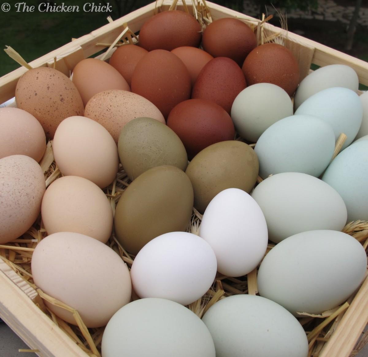 A veritable rainbow of eggs!