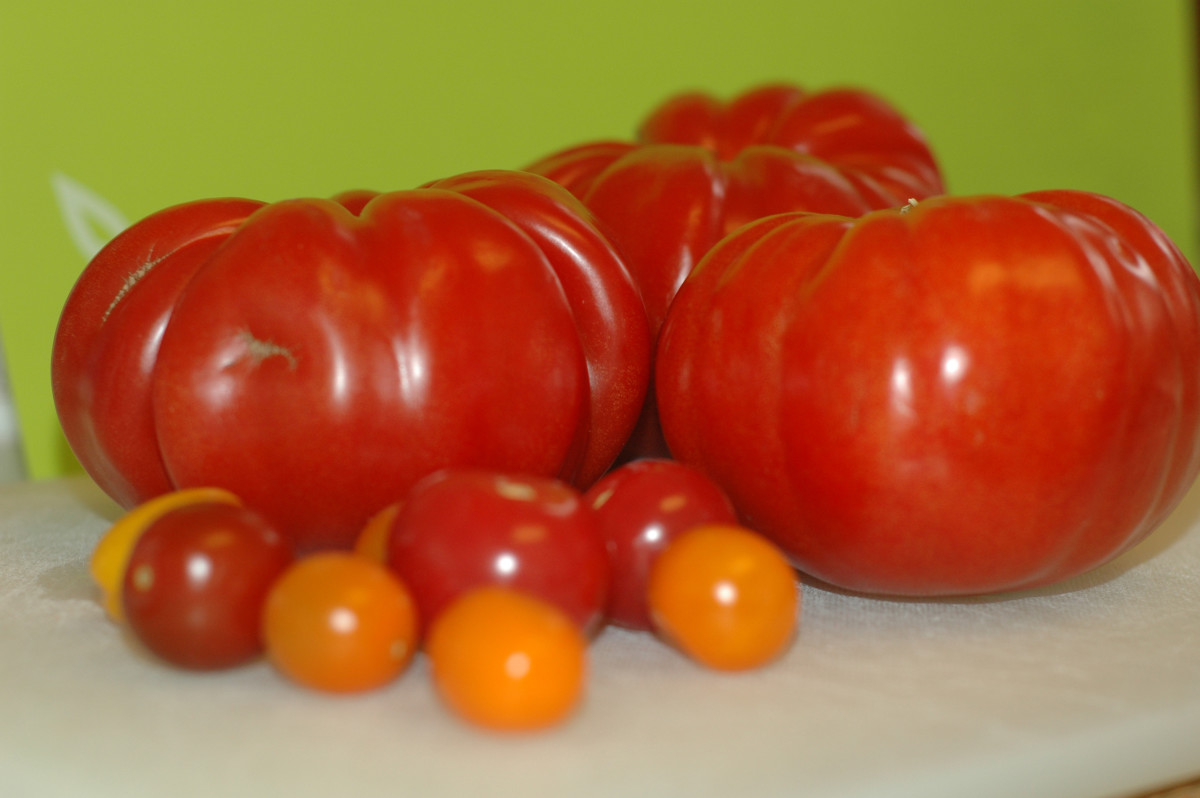 Heirloom Ugly tomatoes and various heirloom cherry and pear tomatoes were used in this preparation