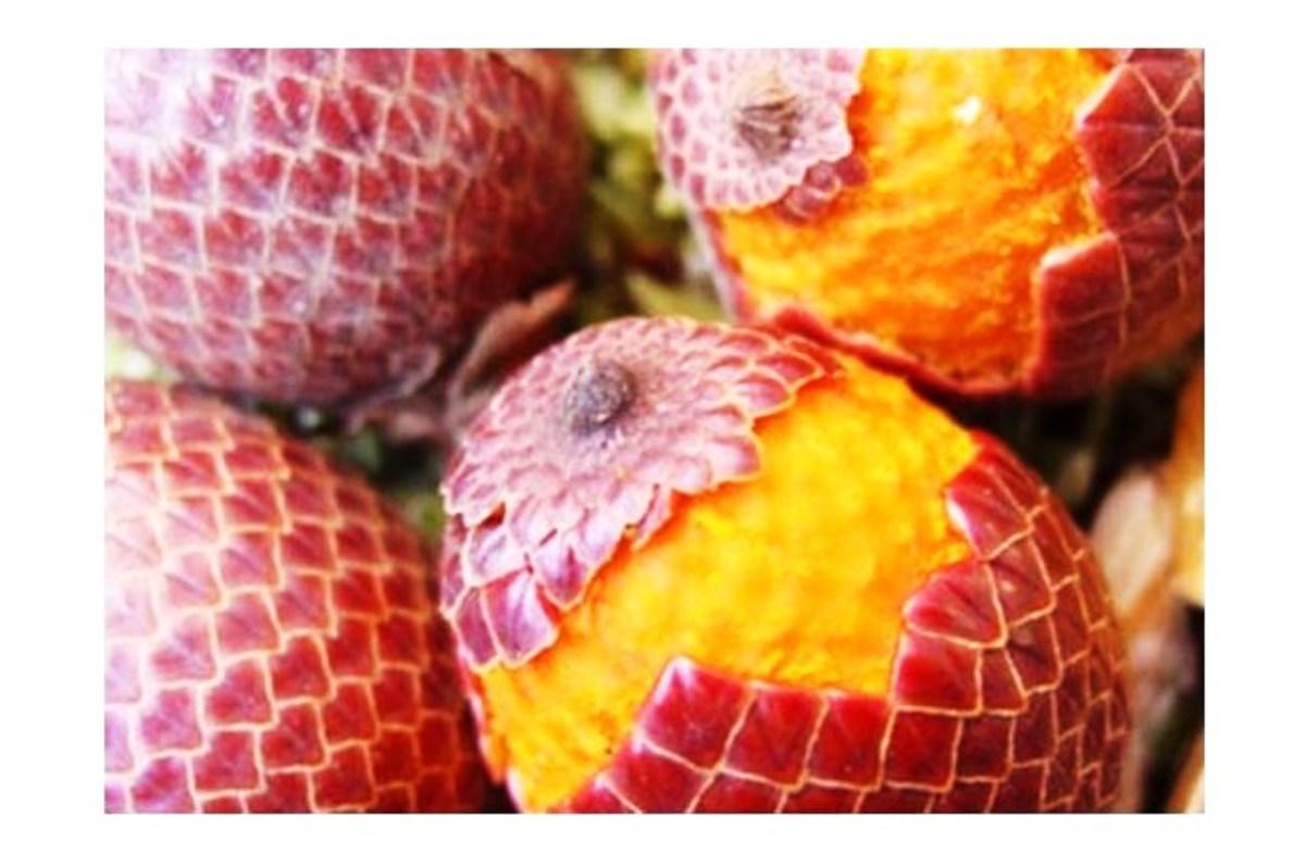 Aguaje fruits