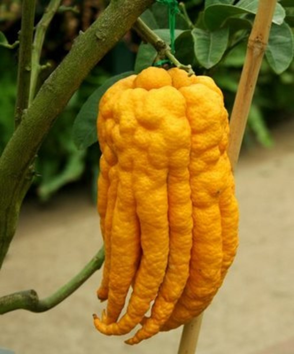 World's Weirdest Fruits