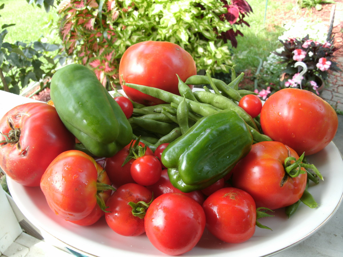 Vegetables harvested from my garden
