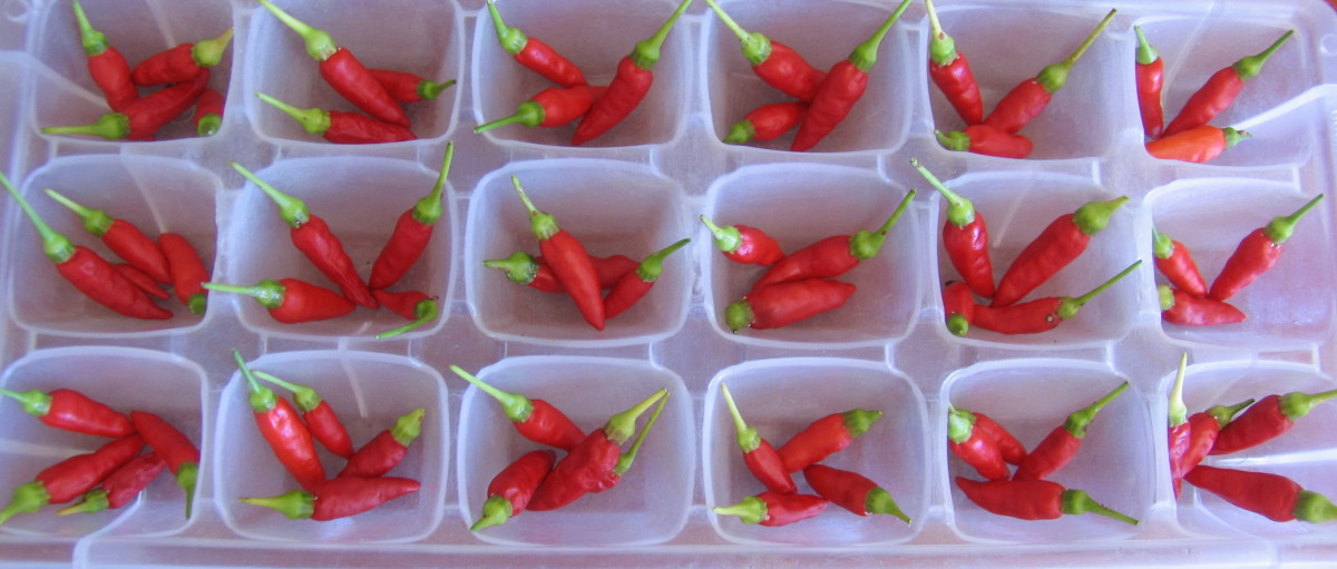 Freezing chilies in an ice cube tray