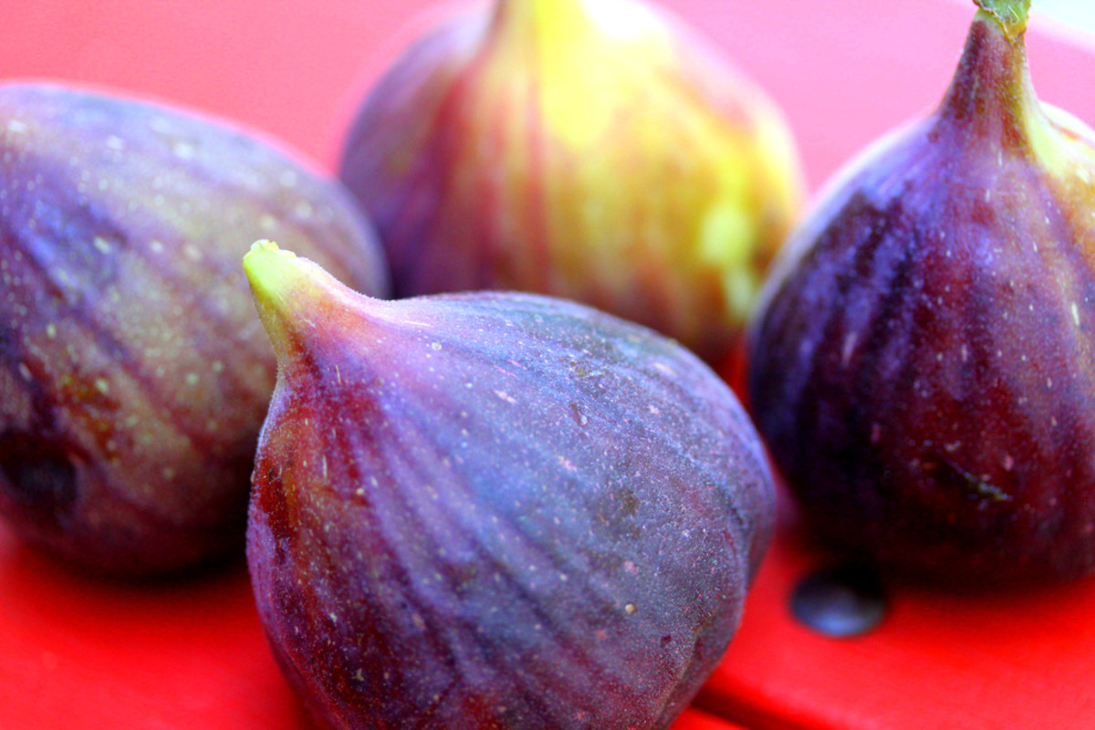 Brown Turkey figs with their typical green stem.
