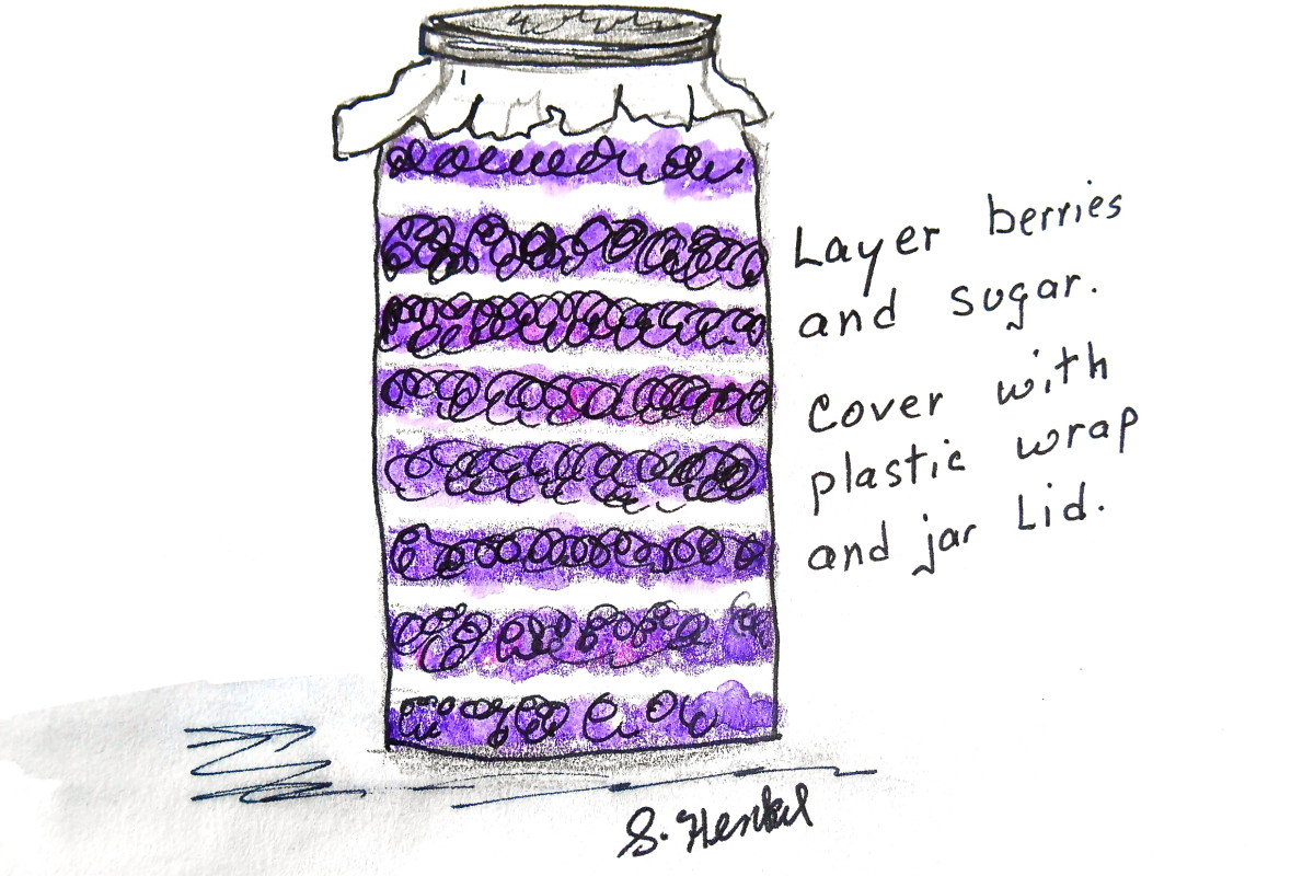 Layer blackberries and sugar in a large glass jar or crock. Cover with plastic wrap. Lay the lid loosely on top and store in dark  place.