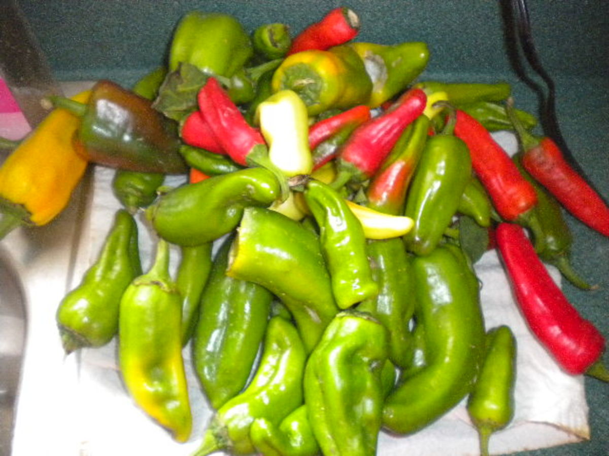 Peppers come in a variety of colors.  Try to include plenty of yellow and red peppers for a beautiful mixture.