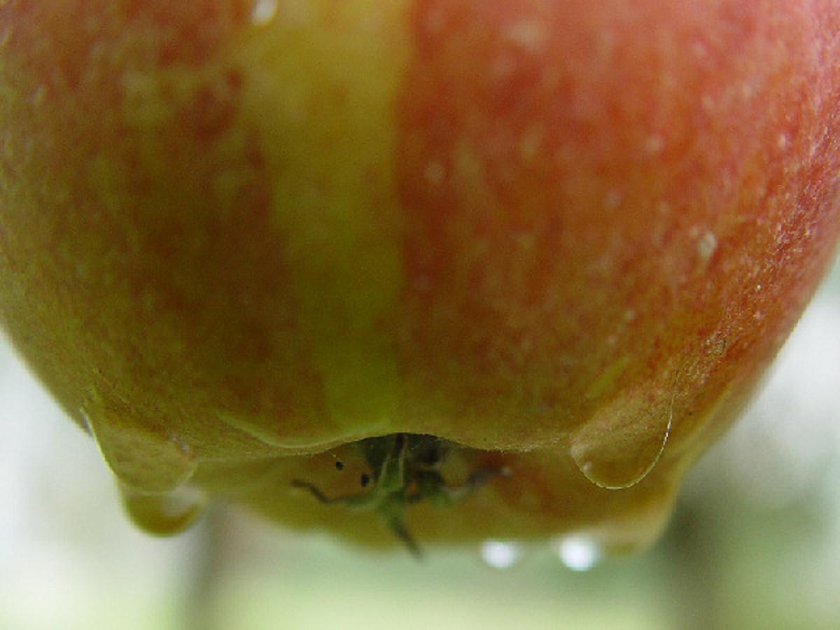 Homemade applesauce is so good!