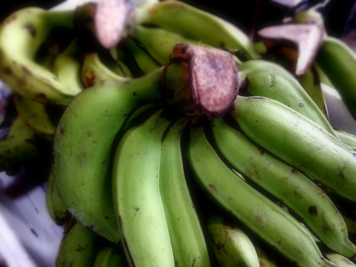 Pisang nangka is green even when ripe. It will turn slightly yellowish when over-ripe. When it is very ripe, it tastes sweet and sour and is also another favorite banana variety for banana fritters.