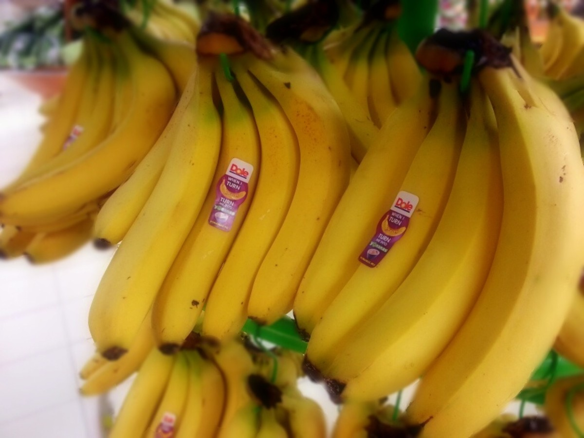 Cavendish banana variety is not suitable for banana fritters.