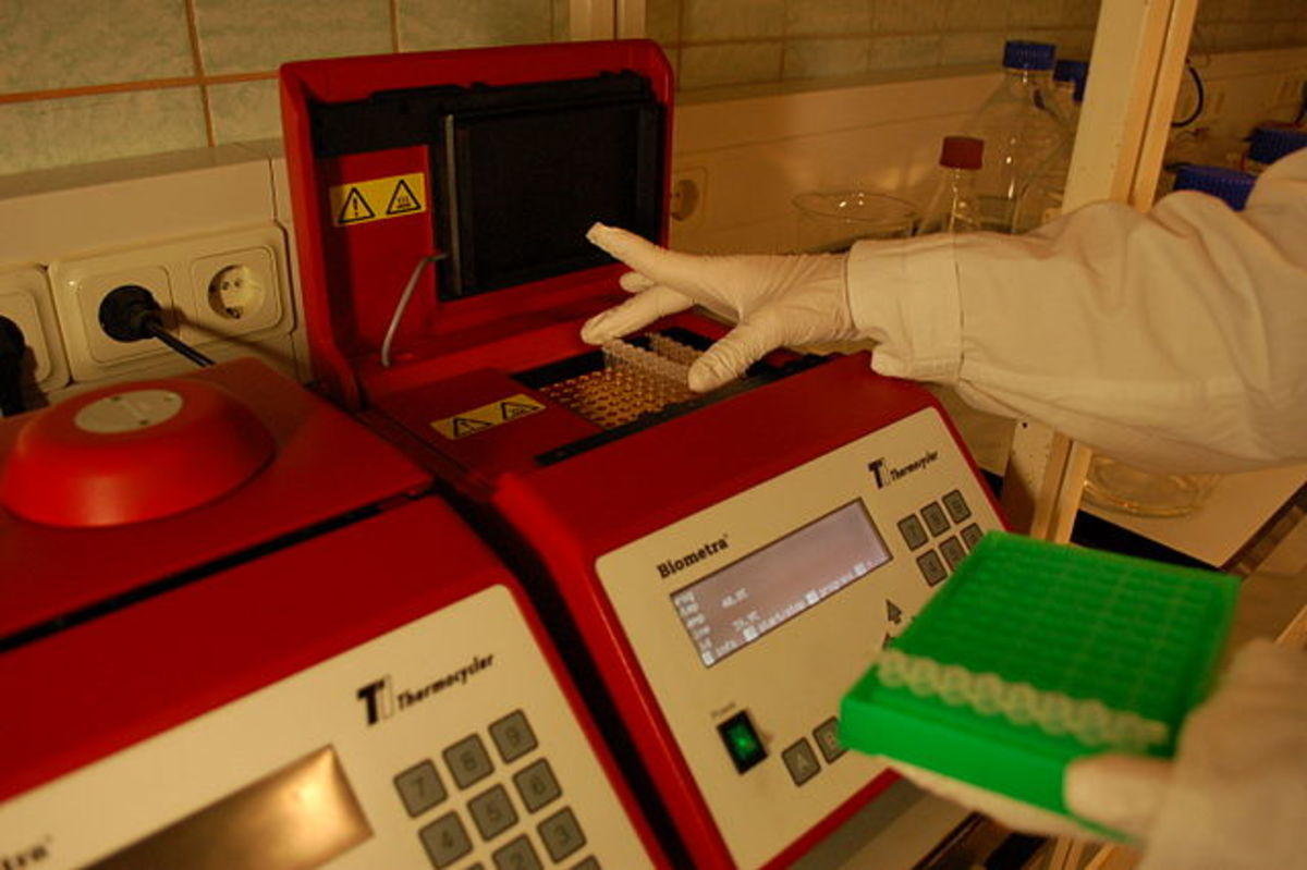 Placing a strip of eight PCR tubes, each containing a 100 μl reaction mixture, into the thermal cycler