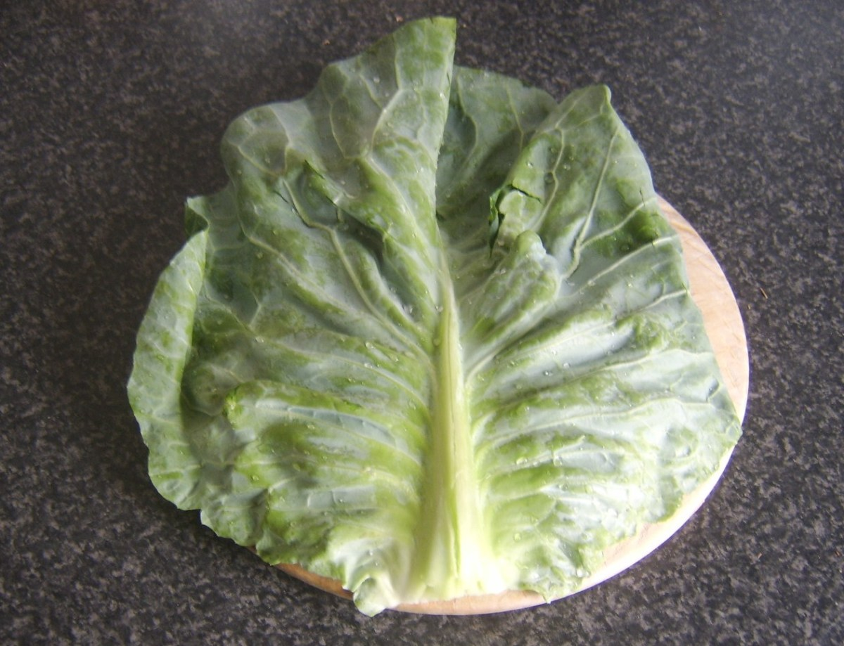 Tough central stalk can be seen running through cabbage leaf