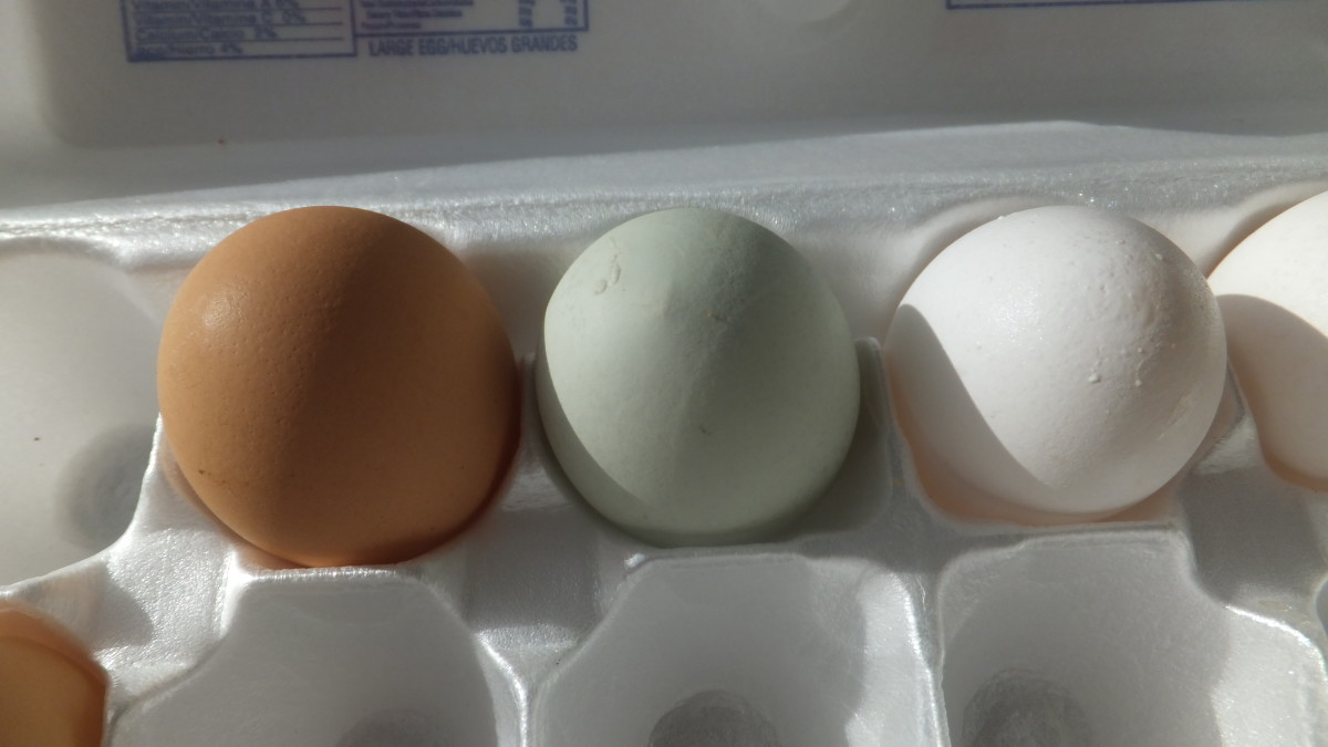 Brown and light green (center) fresh eggs.  A white supermarket egg on the right.