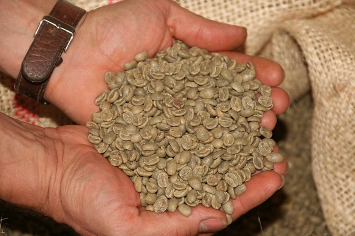 What Is the Difference Between Arabica and Robusta Coffee Beans?