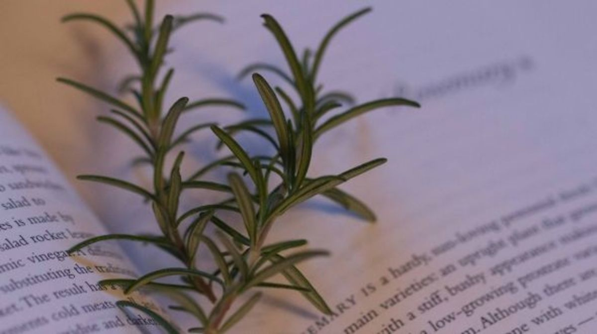 I love gardening, so grow the herbs I use most often - like rosemary!