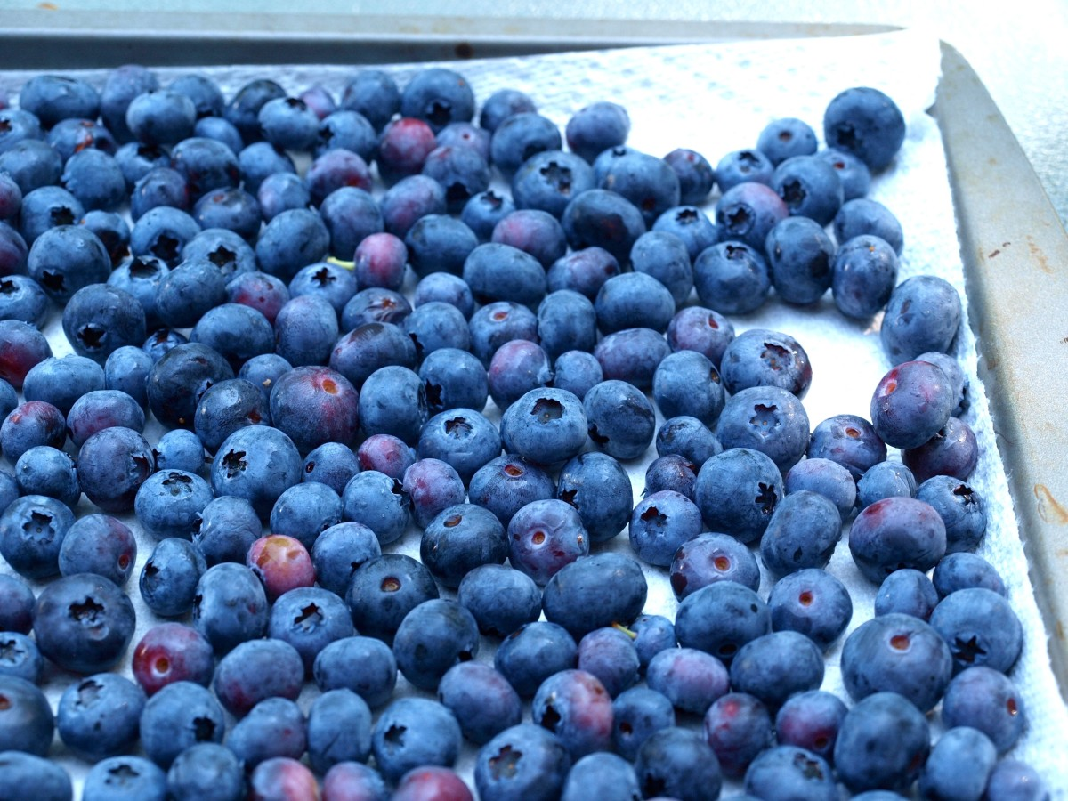 After washing the berries, lay them flat on a baking tray, pat dry and place in freezer until frozen.