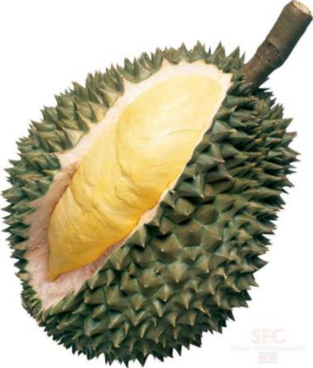 Durian fruit—better tasting than smelling.