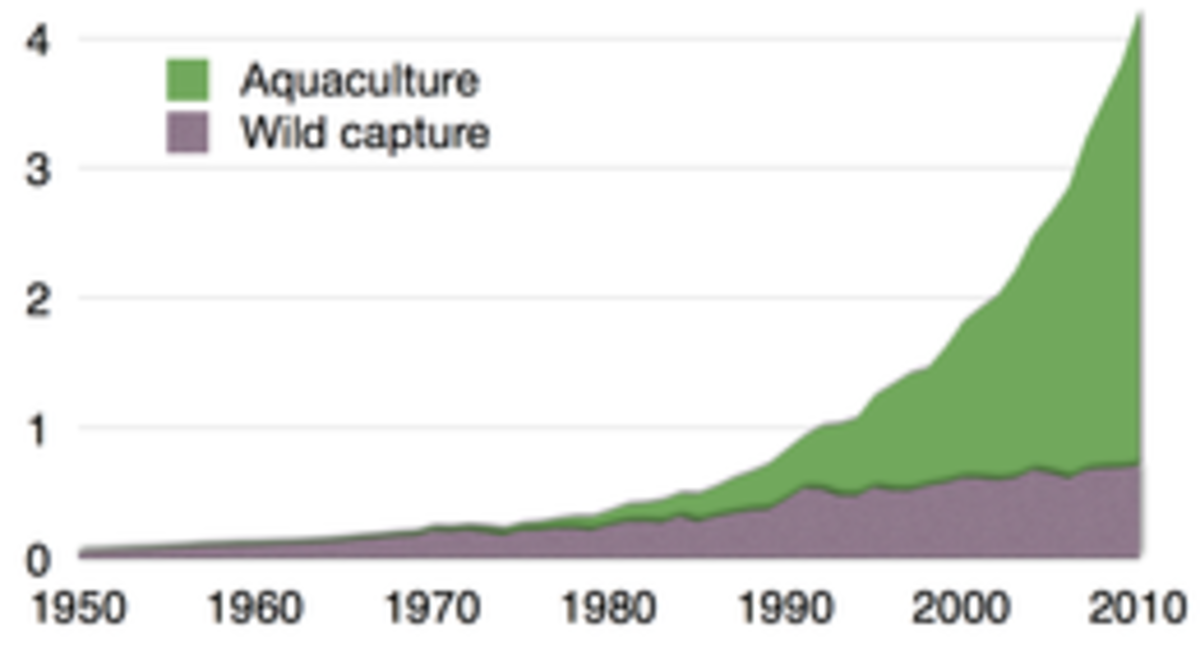 Aquaculture production of Tilapia over time.