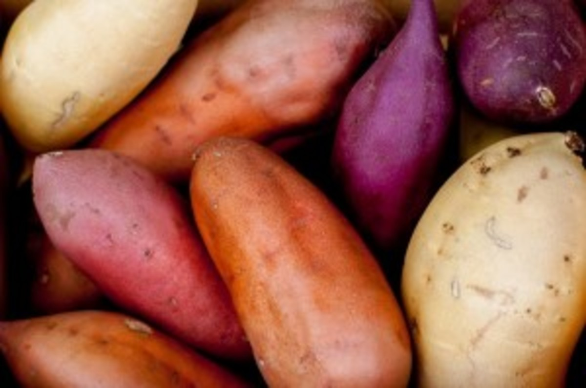 All the different colors of sweet potato!