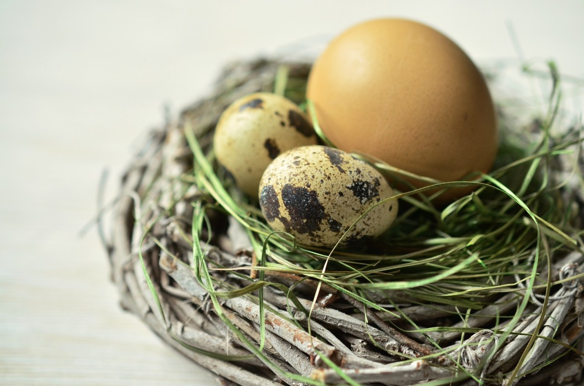 Consider eggs from other types of fowl in addition to regular chicken eggs.