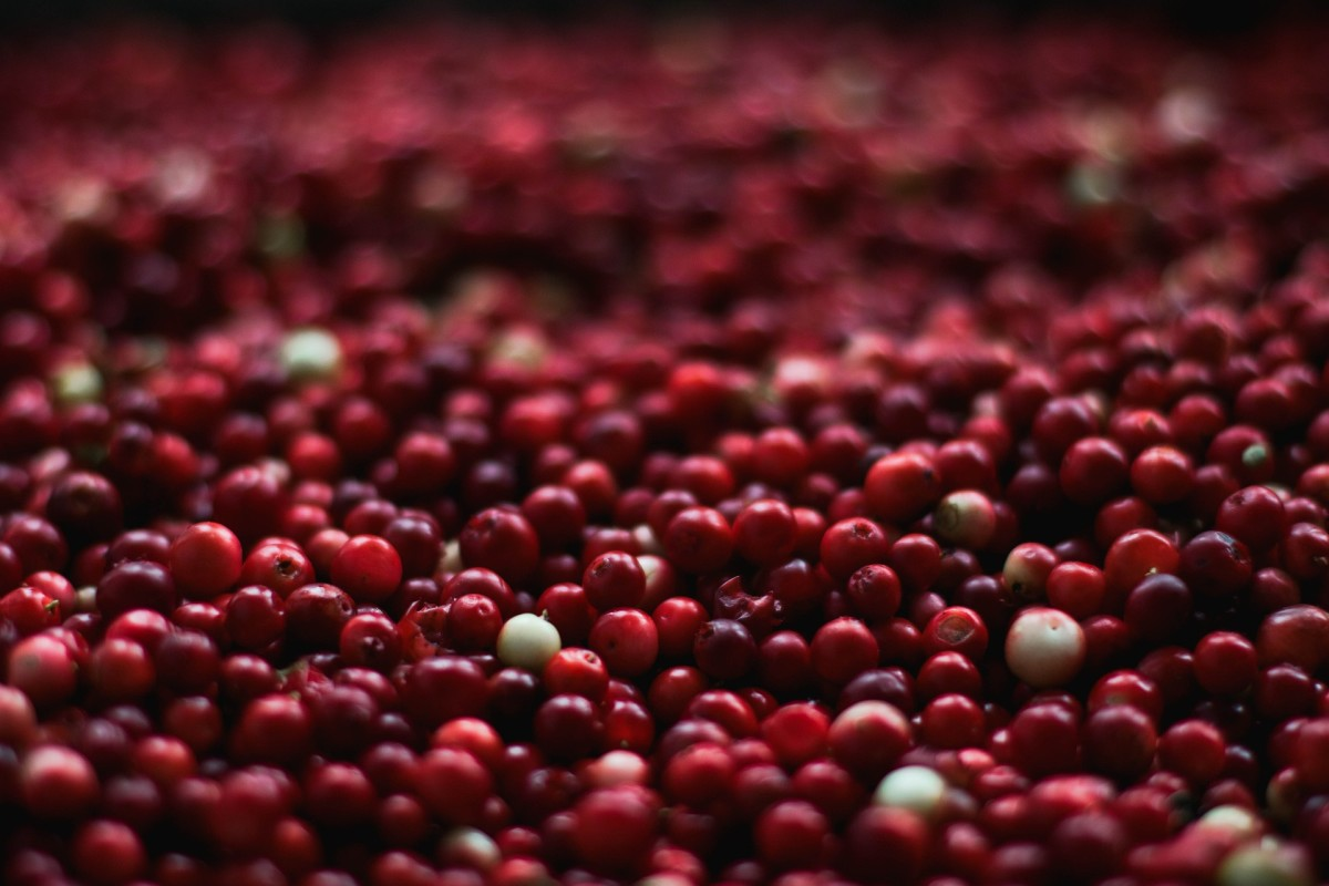 "All About Cranberries: The Original ""Super Fruit"""