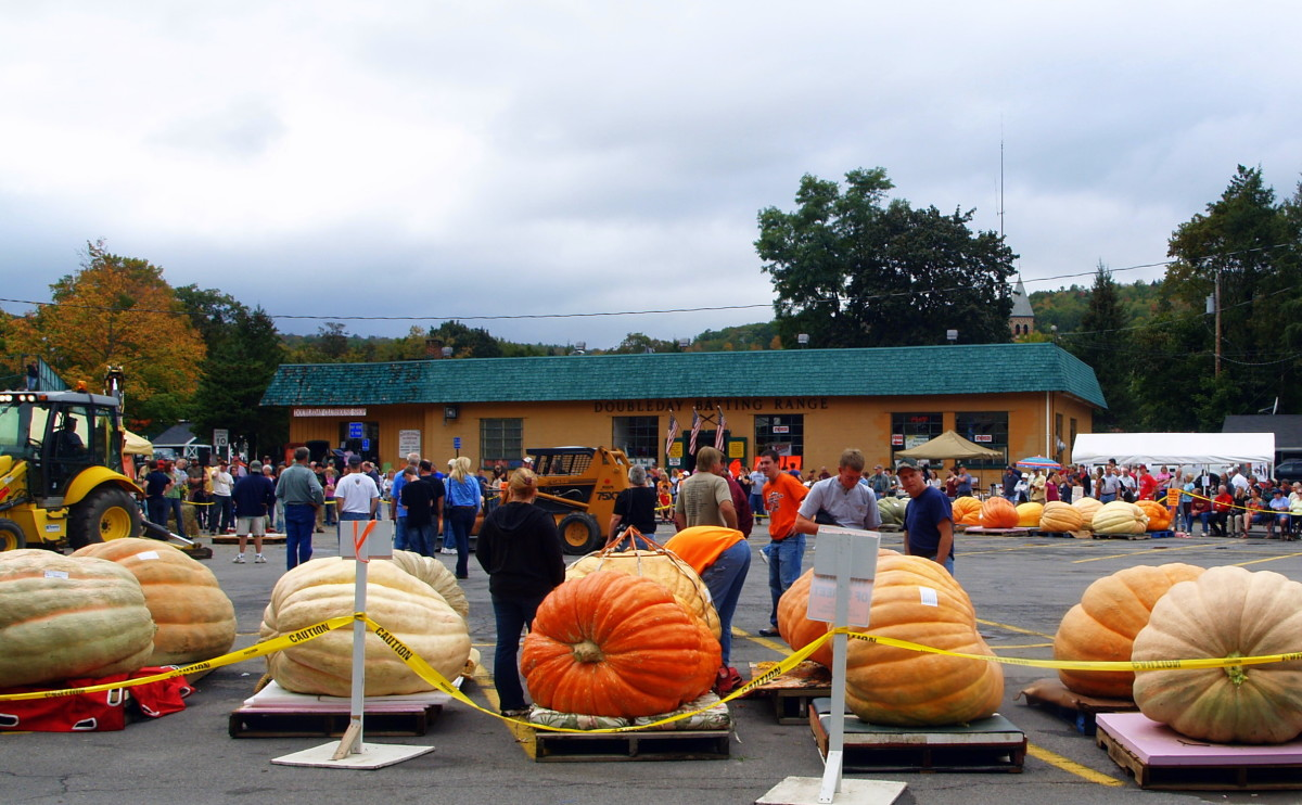 Giant pumpkins in a competition in Cooperstown NY. I have found that substituting pumpkin or other squash for some of the tomato in a recipe greatly reduces the heartburn I would otherwise experience.