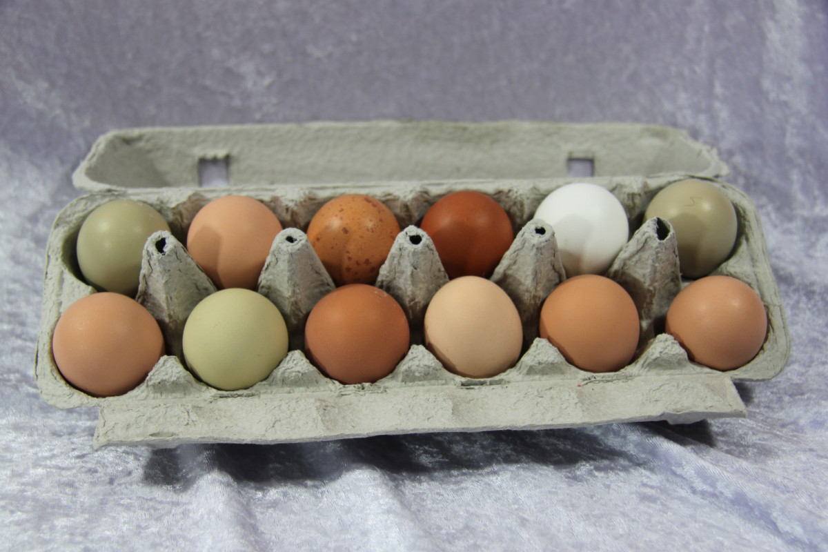 Shopping for quality eggs can be overwhelming if you don't know the code.