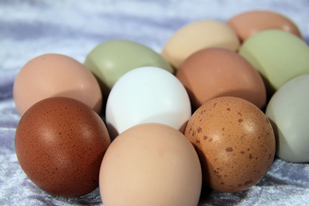 The color of an egg is determined by the hen's genetics.  The quality of the egg is contingent on her health and diet.