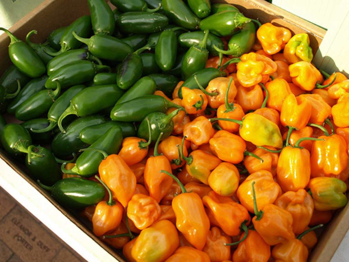 Jalapenos and Habaneros