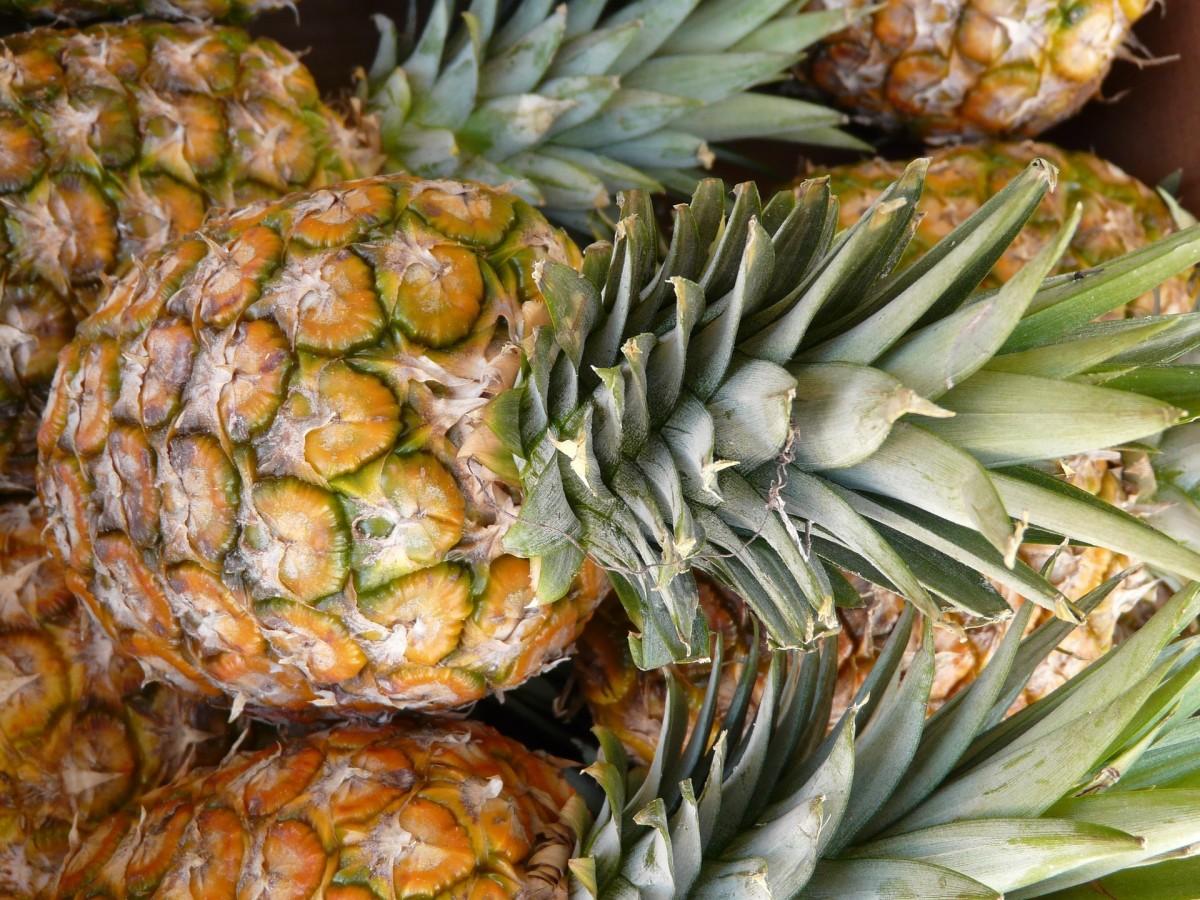 Exploring Pineapple