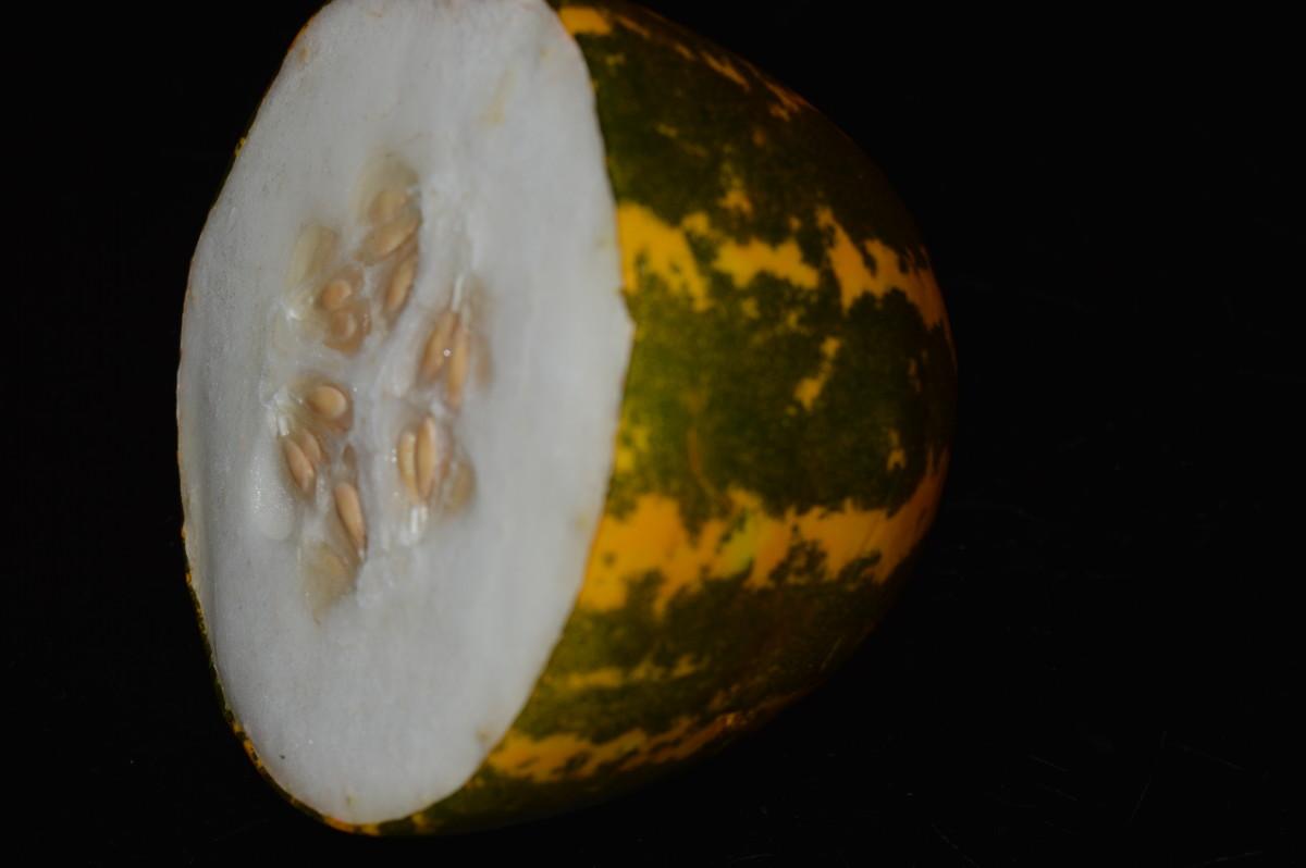 Mogem or Madras cucumber(Bannada sautekai)
