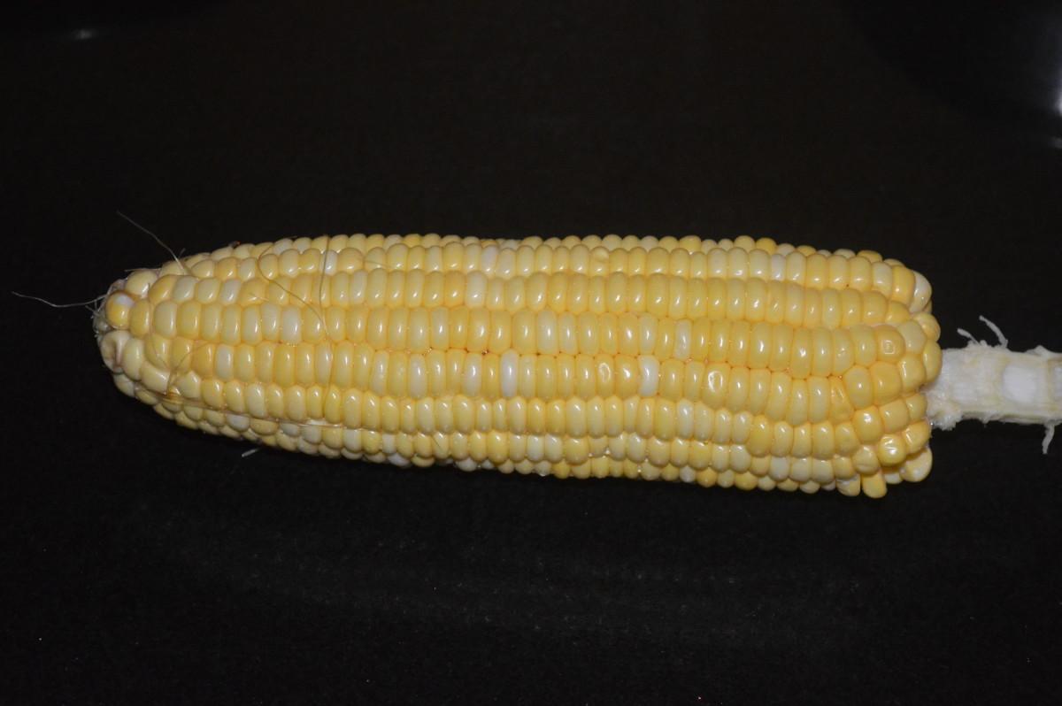 Sweet corn cob