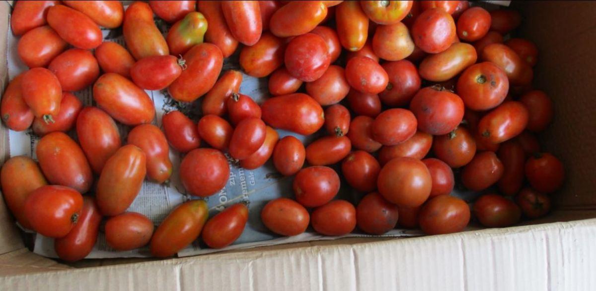 many, many tomatoes