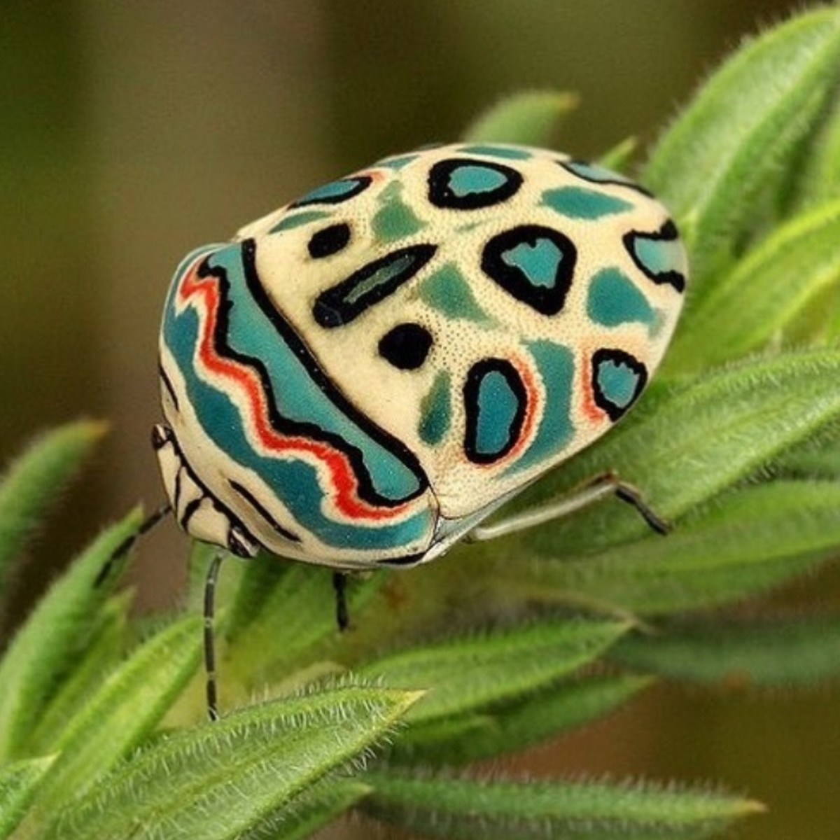 Top 10 Most Beautiful Insects in the World
