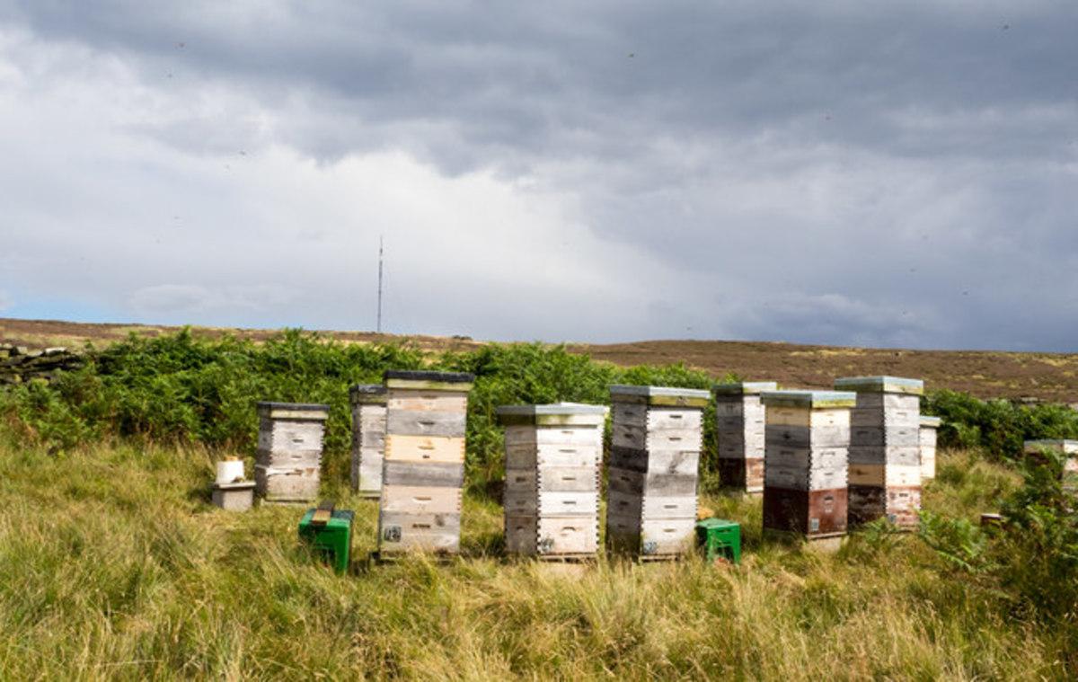 bee storages