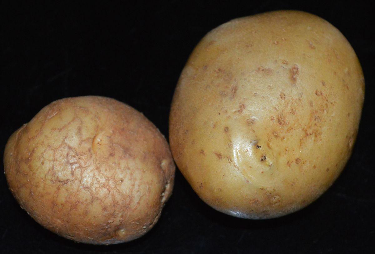 Step one: Take two potatoes. Wash them.