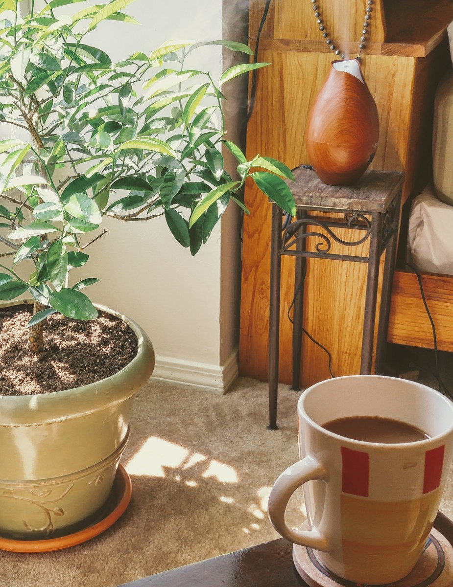 full cup of coffee on a table near a plant