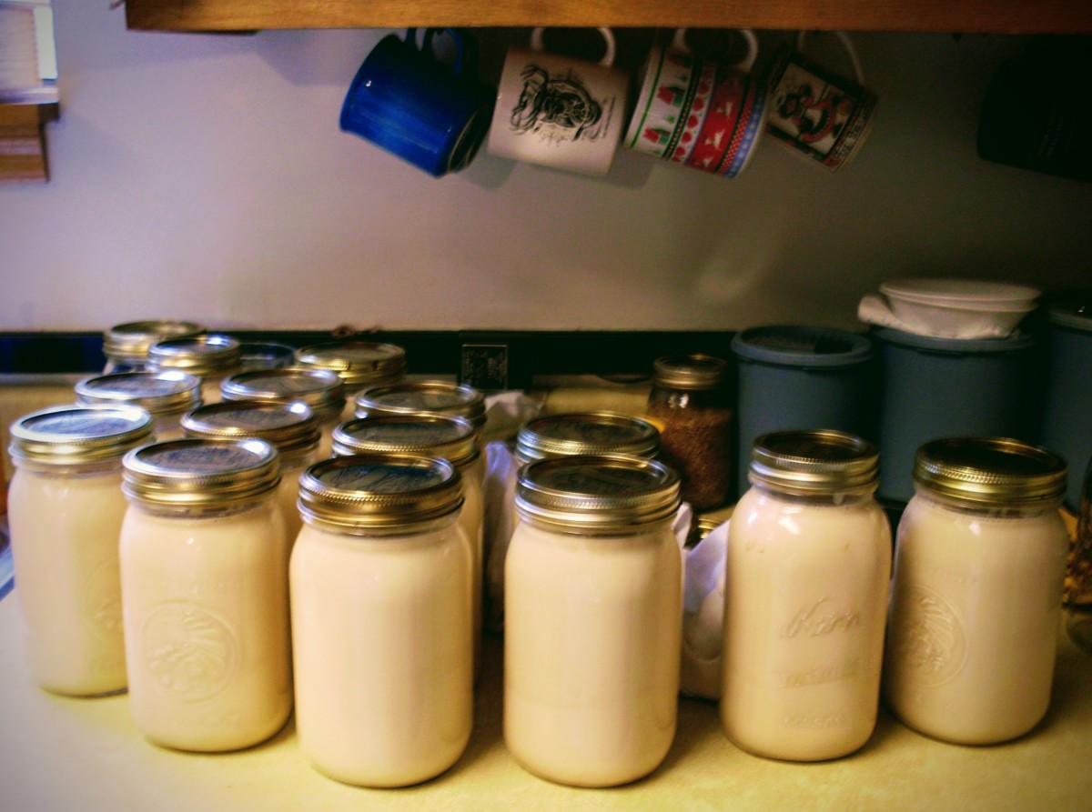 A batch of clean, shiny, completed jars of canned goats milk.