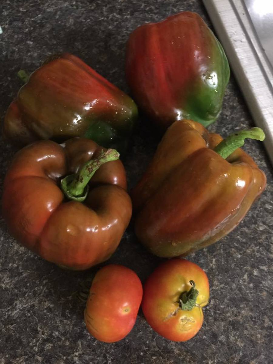 Some of my red peppers from the garden last year.