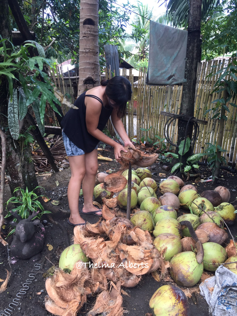 Removing the husks from the brown coconuts