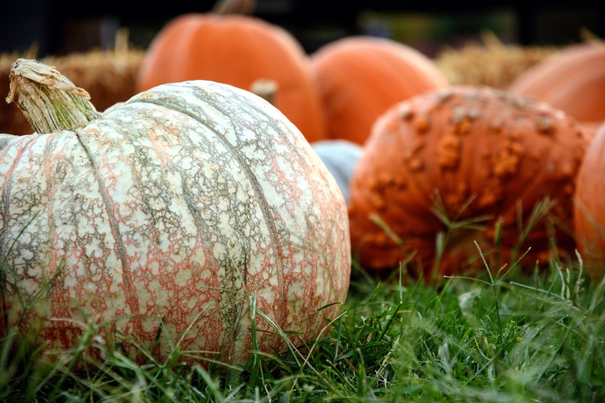 14-delicious-ways-to-use-your-extra-pumpkins