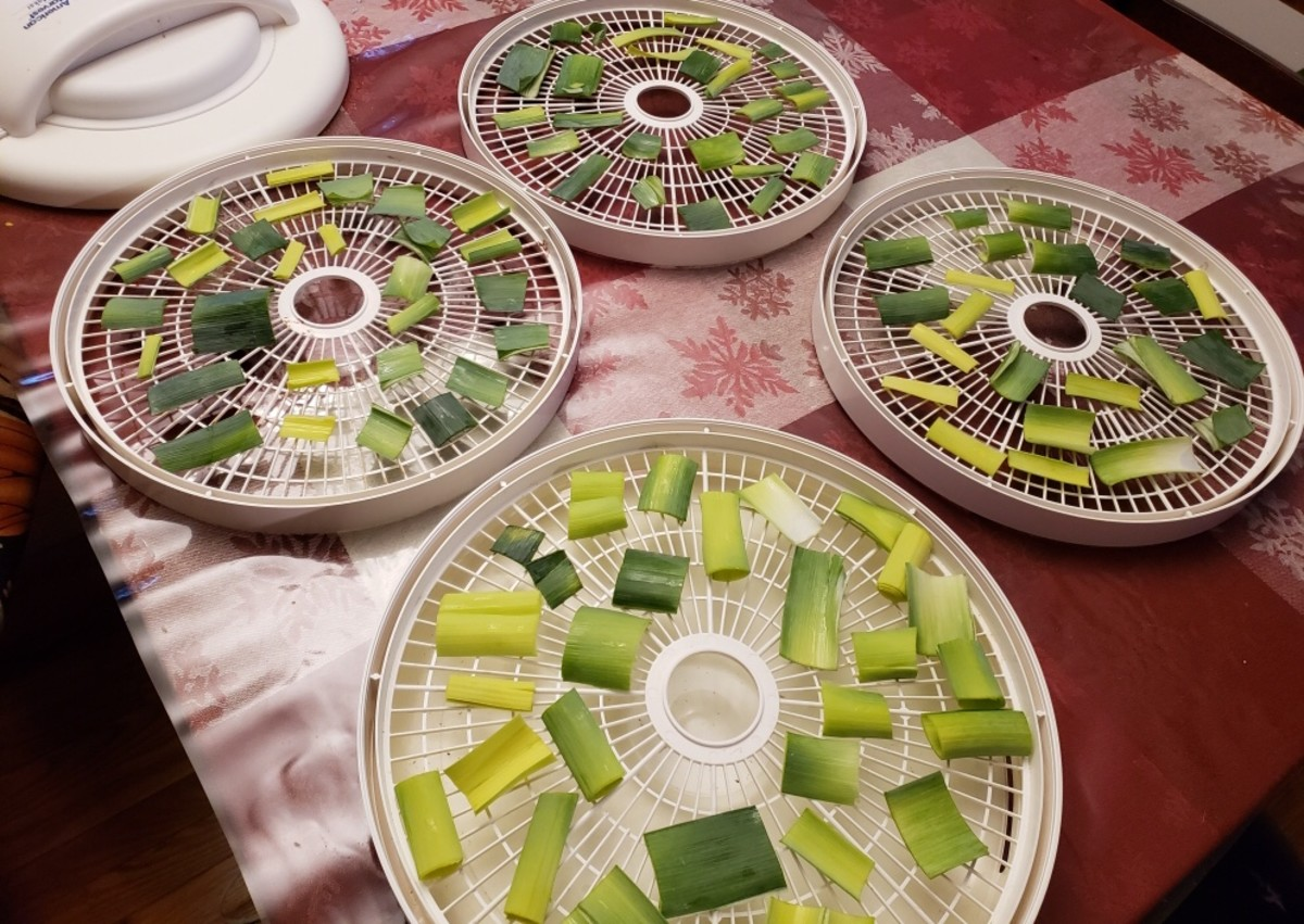 Arrange the tops on a food dehydrator tray or in an oven on parchment paper.  We use the food dehydrator.