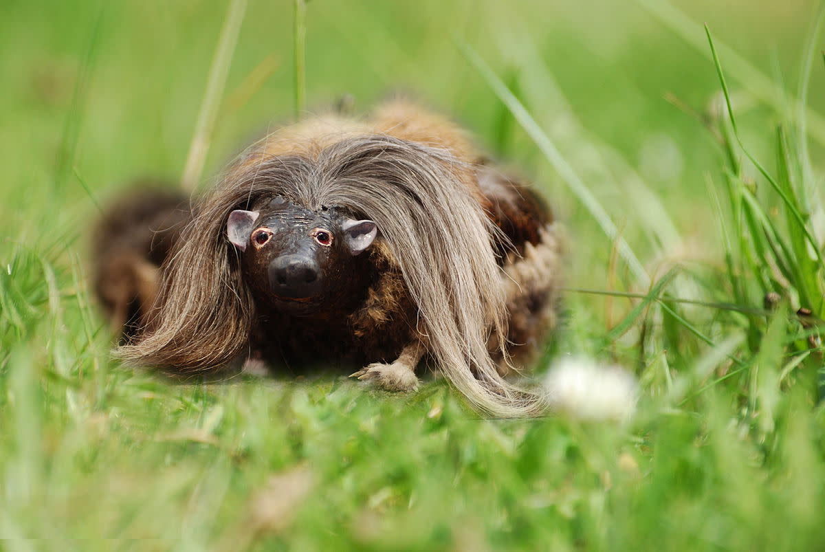 The rarely photographed haggis in its natural habitat.