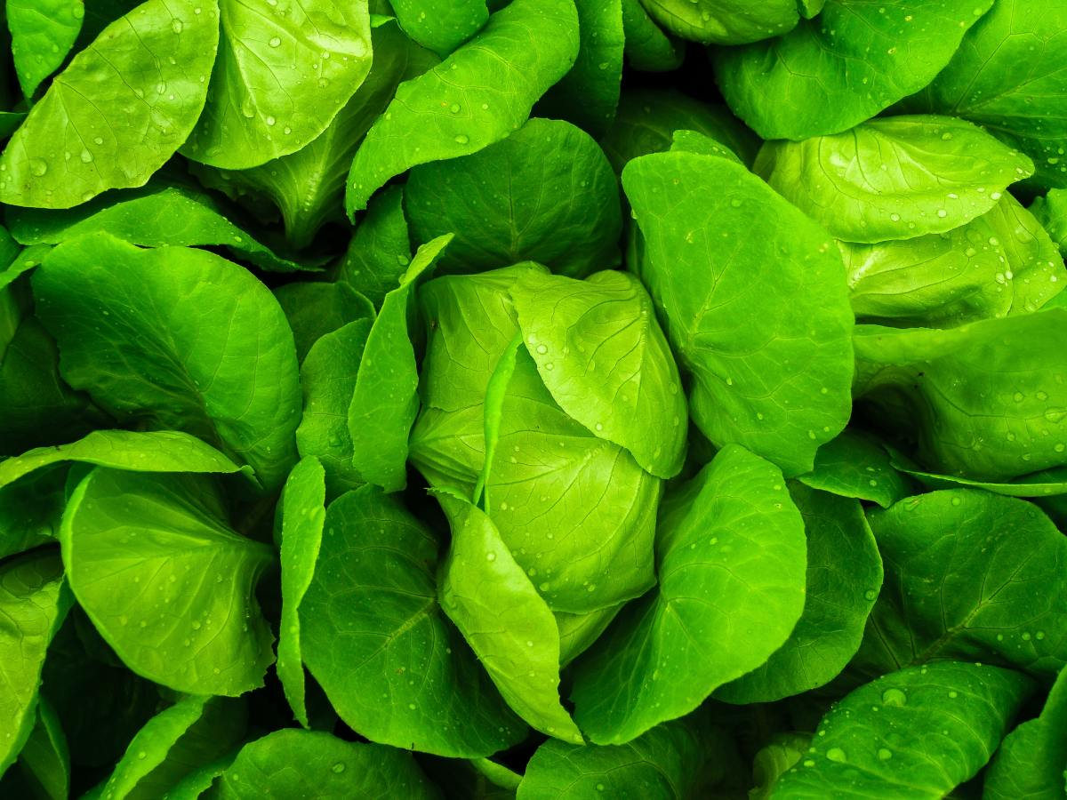Eat more fresh, uncooked greens.