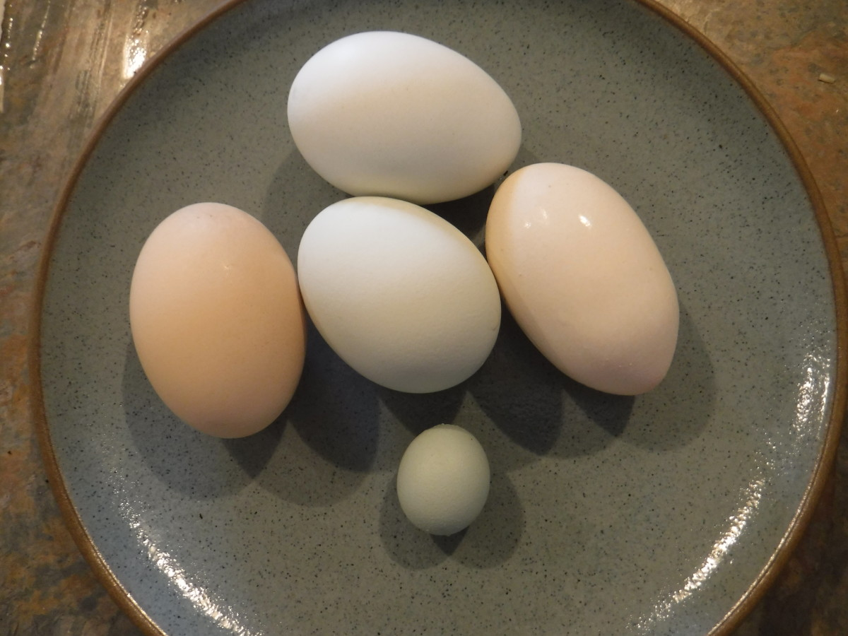 The natural variety of eggs you won't find in supermarket egg cartons, including a double-yolk egg at right and a pullet egg at bottom.