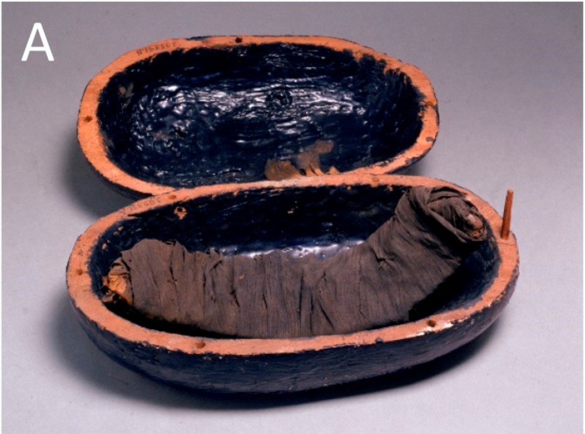 Beef rib meat mummy from the tomb of Yuya and Tjuiu (1386–1349 BC)